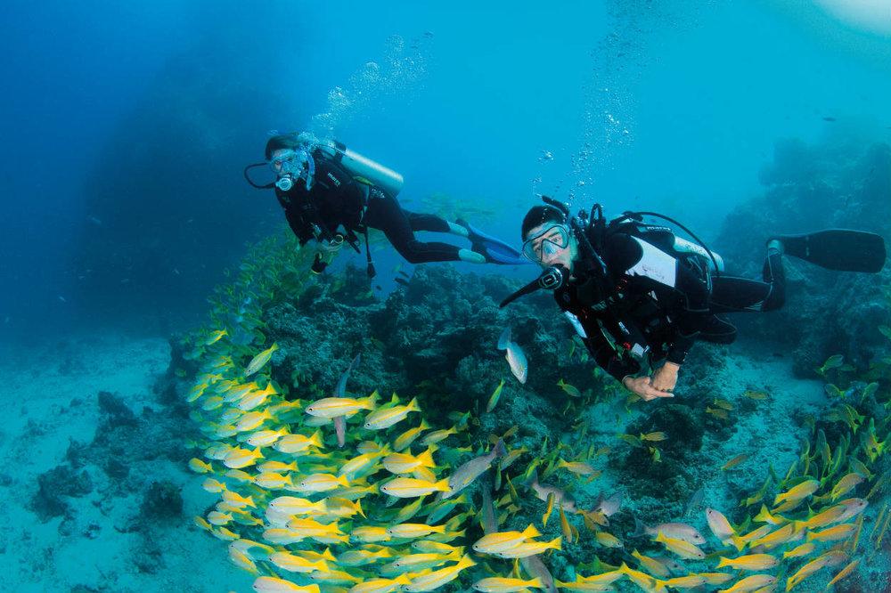 Diving Credit TTNQ.jpg