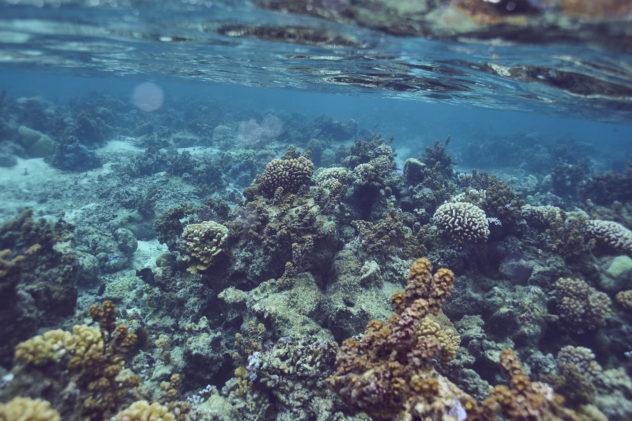 Tahiti_coral-e1526270300587.jpg