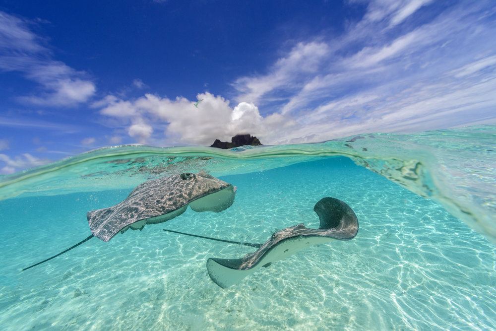 Stingrays in the lagoon