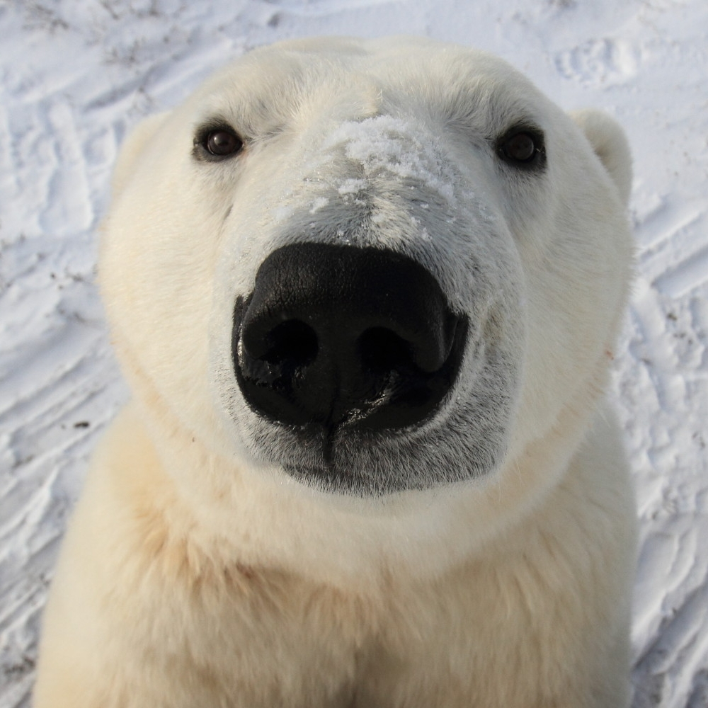 o-POLAR-BEAR-HOTEL-facebook.jpg