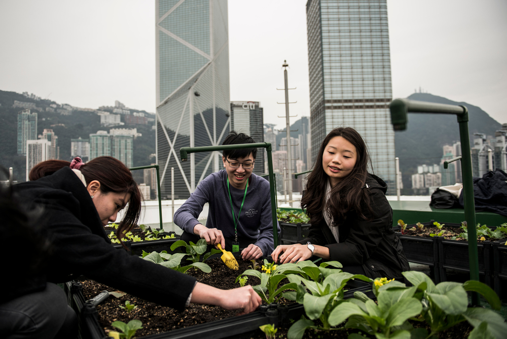 Workshop participants harvest vegetables on a rooftop garden in Hong Kong set up by Rooftop Republic. Photo: Xaume Olleros
