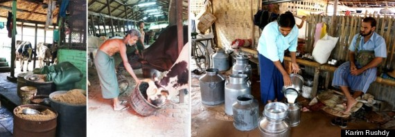 Small business owners like these dairy farmers north of Yangon will struggle to compete with foreign competition