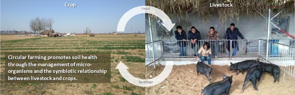 circular_farming.png