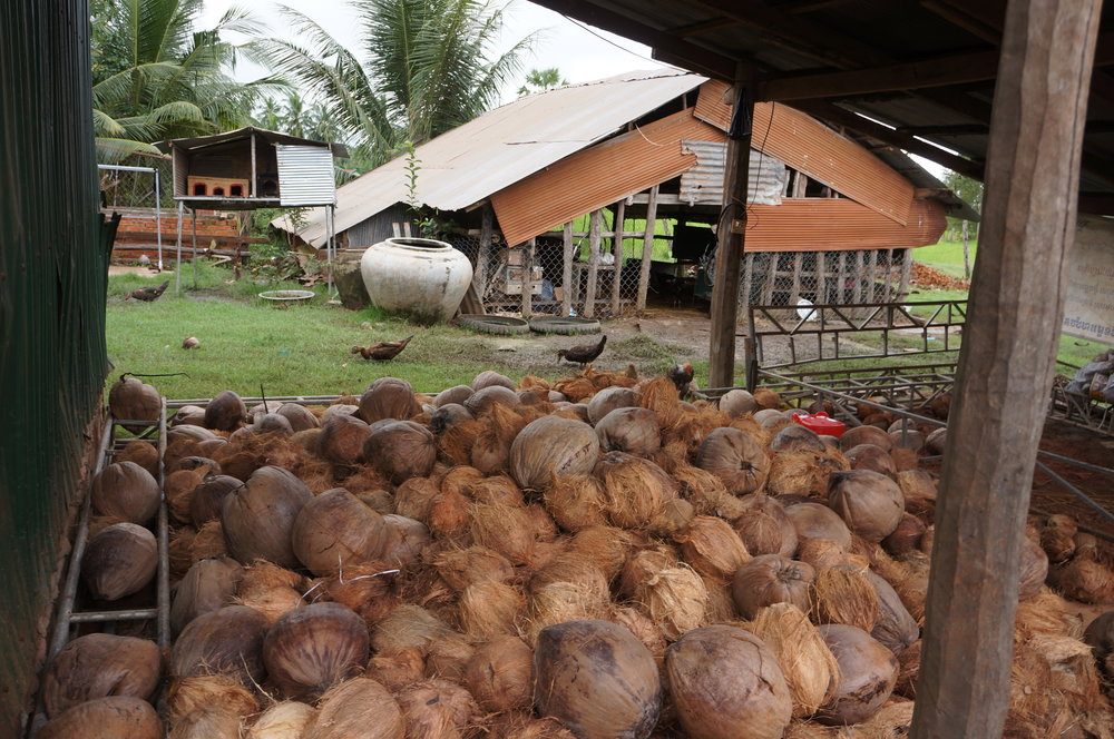 Global Leaders Programme | Coconuts in Cambodia