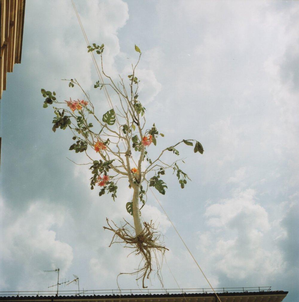 Brisighella , 2005,© Cesare Fabbri