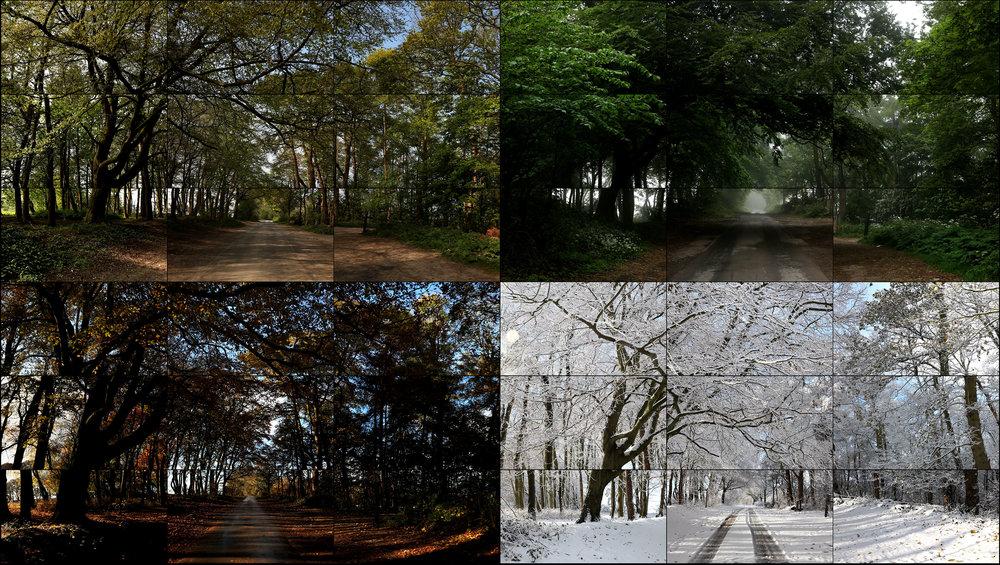 The Fours Seasons, Woldgate Woods,   2010-2011 (Spring 2011, Summer 2010, Autumn 2010, Winter 2010) [Les Quatre Saisons, Bois de Woldgate (printemps, 2011 ; été, 2010 ; automne, 2010 ; hiver, 2010)] 36 vidéos digitales synchronisées et présentées sur 36 moniteurs de 139 cm formant une seule œuvre 4 min 21 s © David Hockney. Collection de l'artiste