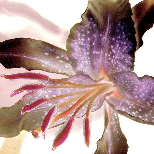 Details, a flower's best assets  #BlacklockStudios #FloralPrints