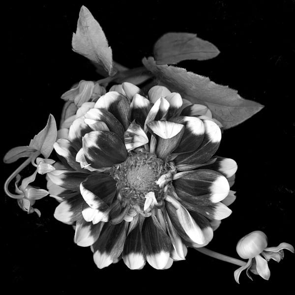 Black and White Floral Photography by #BlacklockStudios