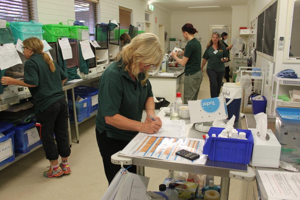 Volunteers work in the wildlife hospital.