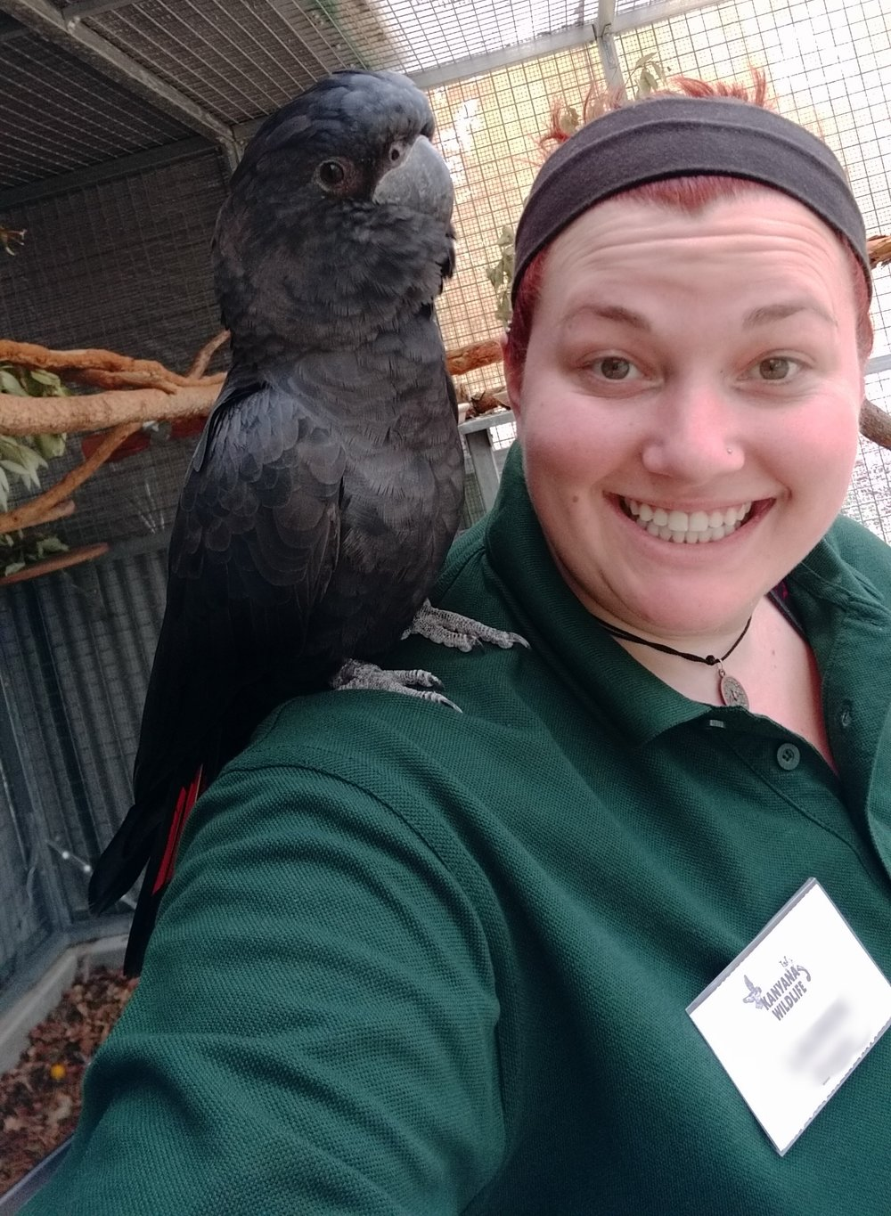 An international volunteer and a bird brain in sanctuary.