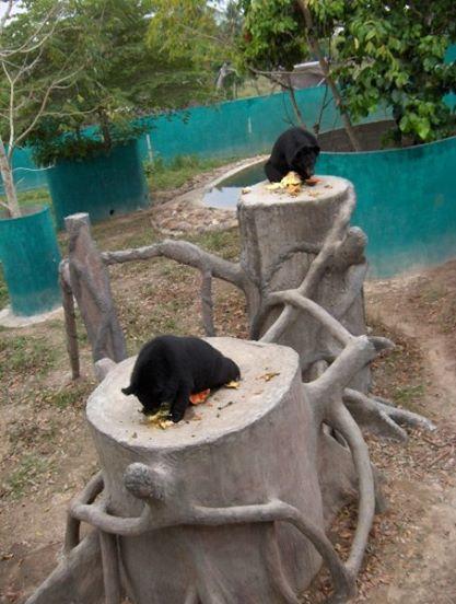 bears at wfft.jpg
