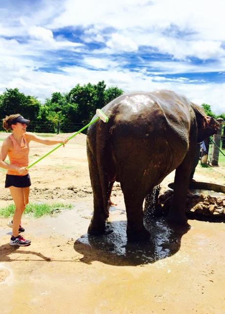 Volunteers wash orphaned elephants.