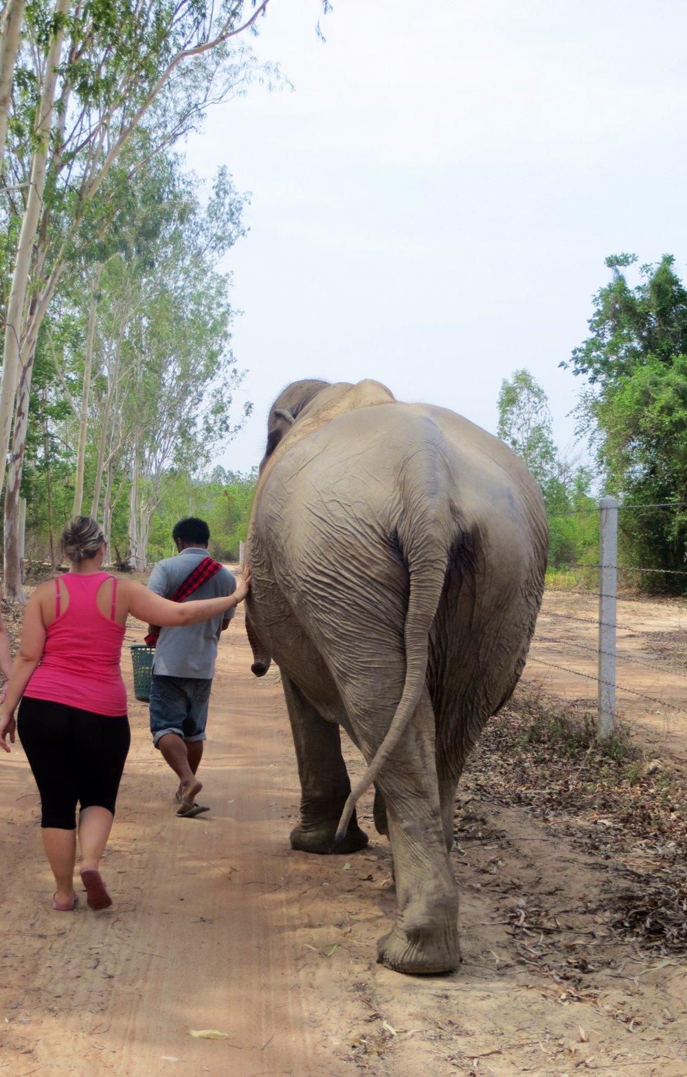 Jess taking Pailin for a walk with the Mahoot.jpeg