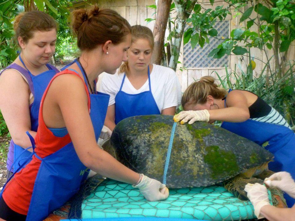 Osa - turtle measuring.jpg