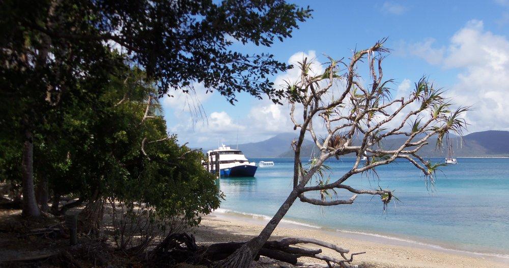 Sea Turtle Cairns 167.JPG