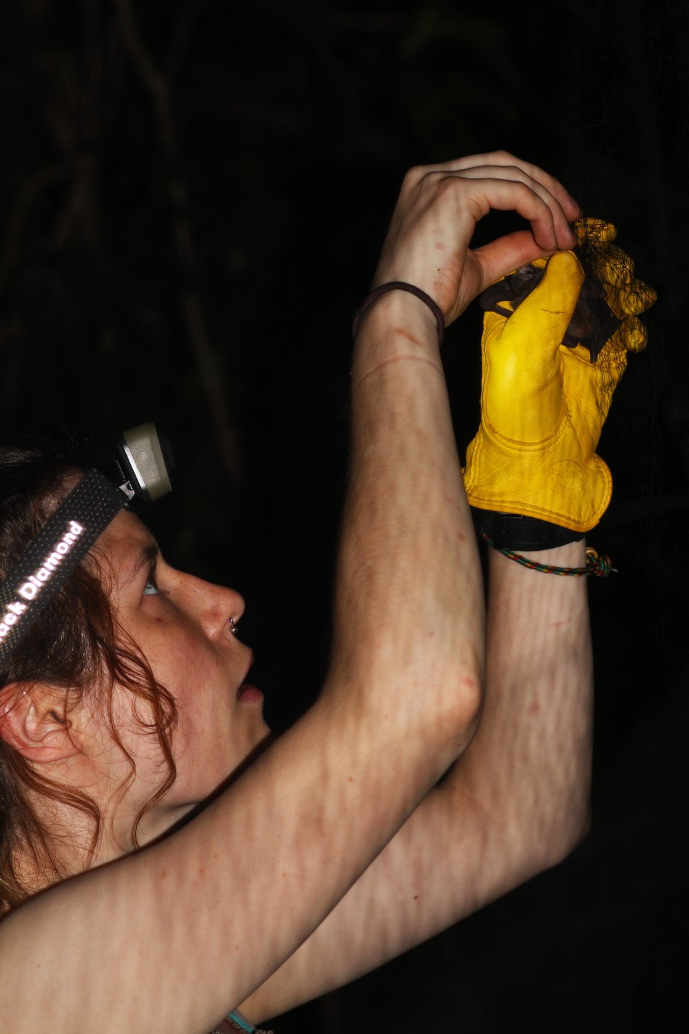 Volunteers help with bats in Cuba