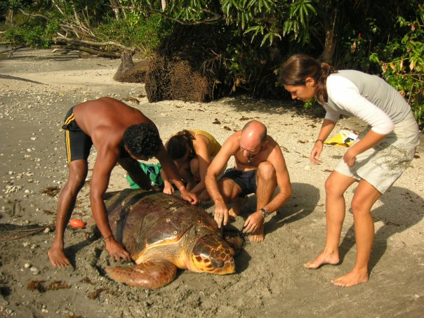 Pacuare - Working with Turtles.jpg