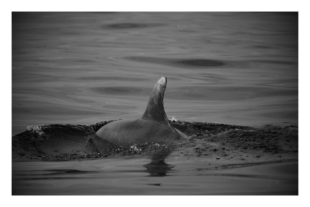 Kieran dolphin Croatia.jpg