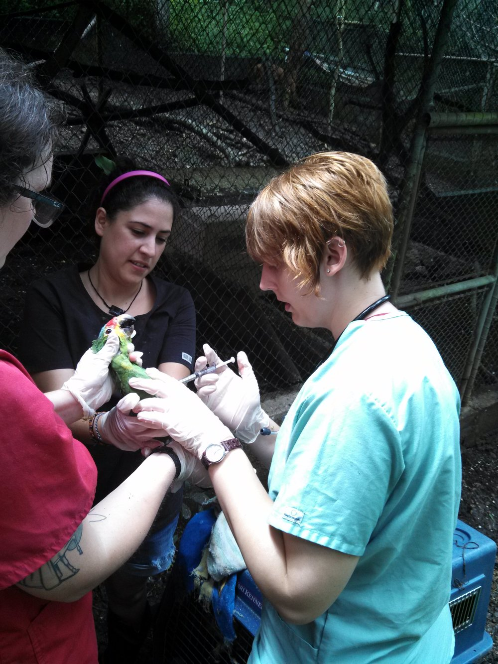 Volunteers learn how to give parrot medication to orphaned parrots.
