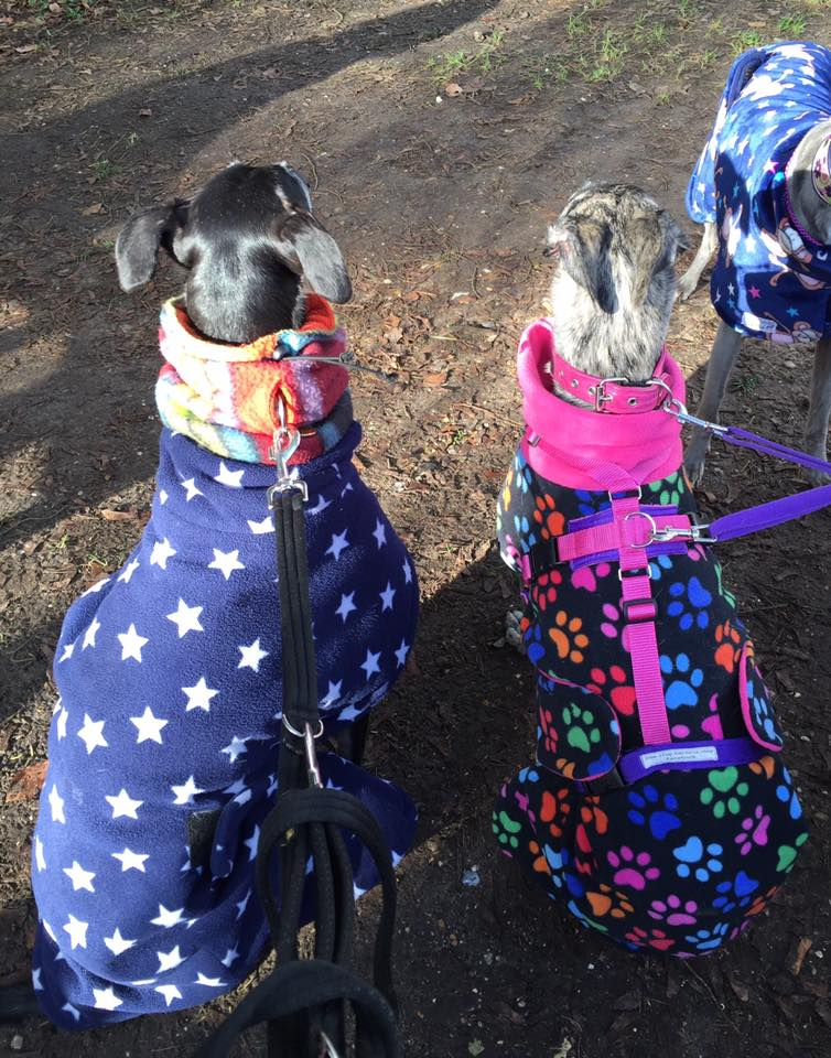 galgos in coats.jpg