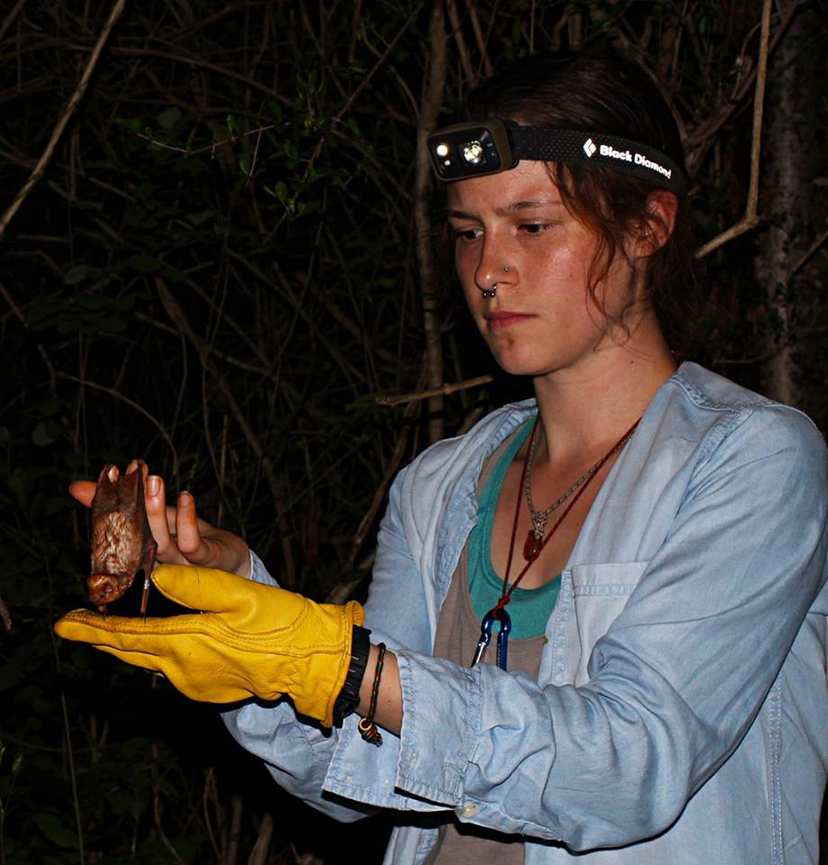 Volunteers checking the biometrics of a bat.
