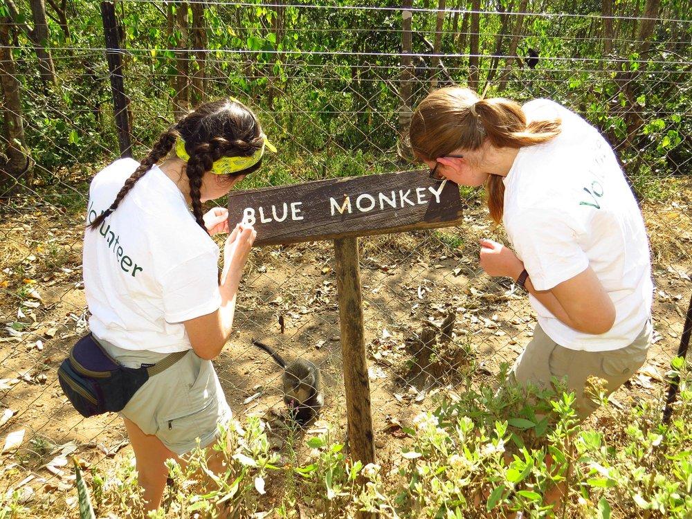 blue monkey.jpg