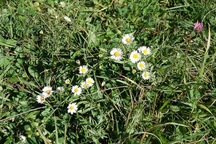 IaA - White Lily Pond-15.jpg