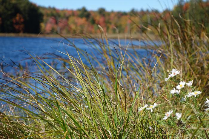IaA - White Lily Pond-10.jpg
