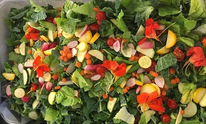 Our beautiful, school-garden-grown salads for San Rafael City School District cafeterias!