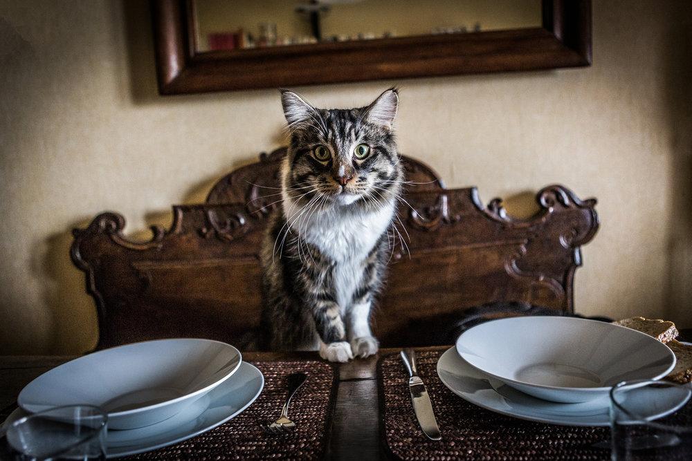 fotografia animali domestici milano