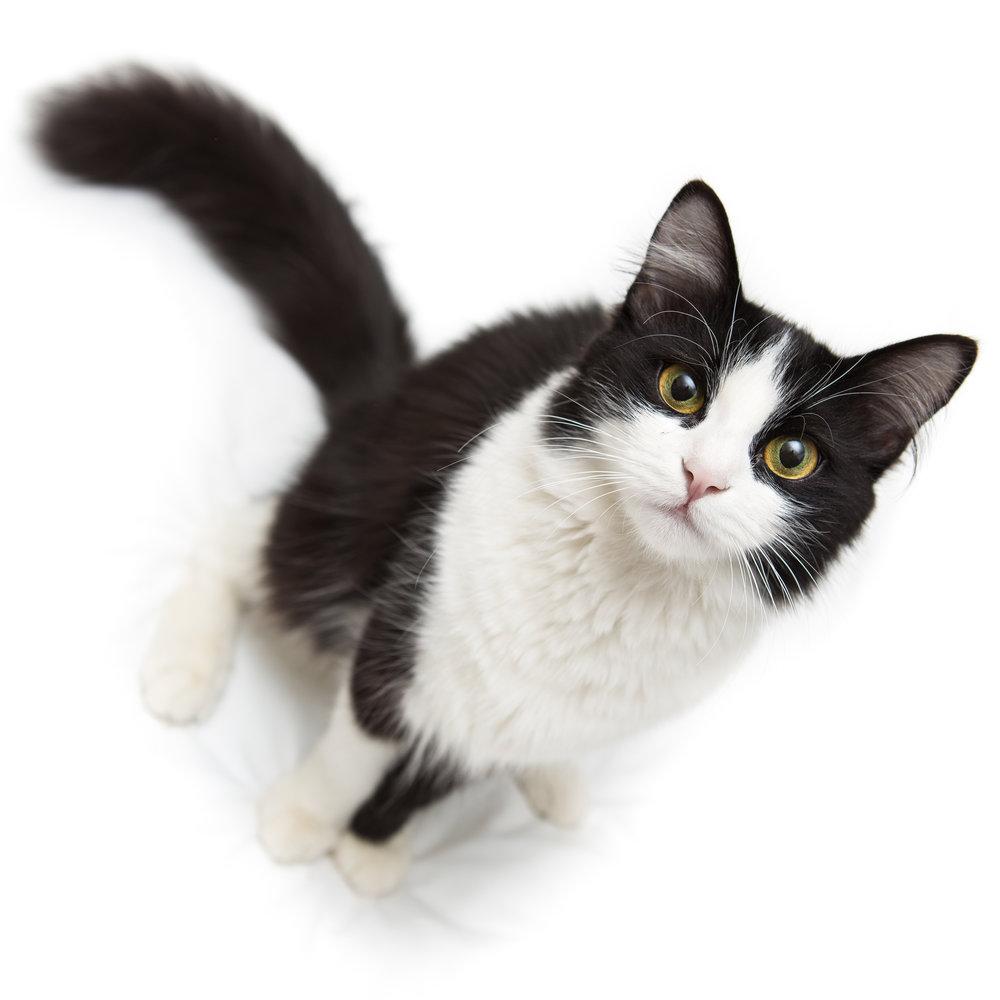 fotografo gatti milano