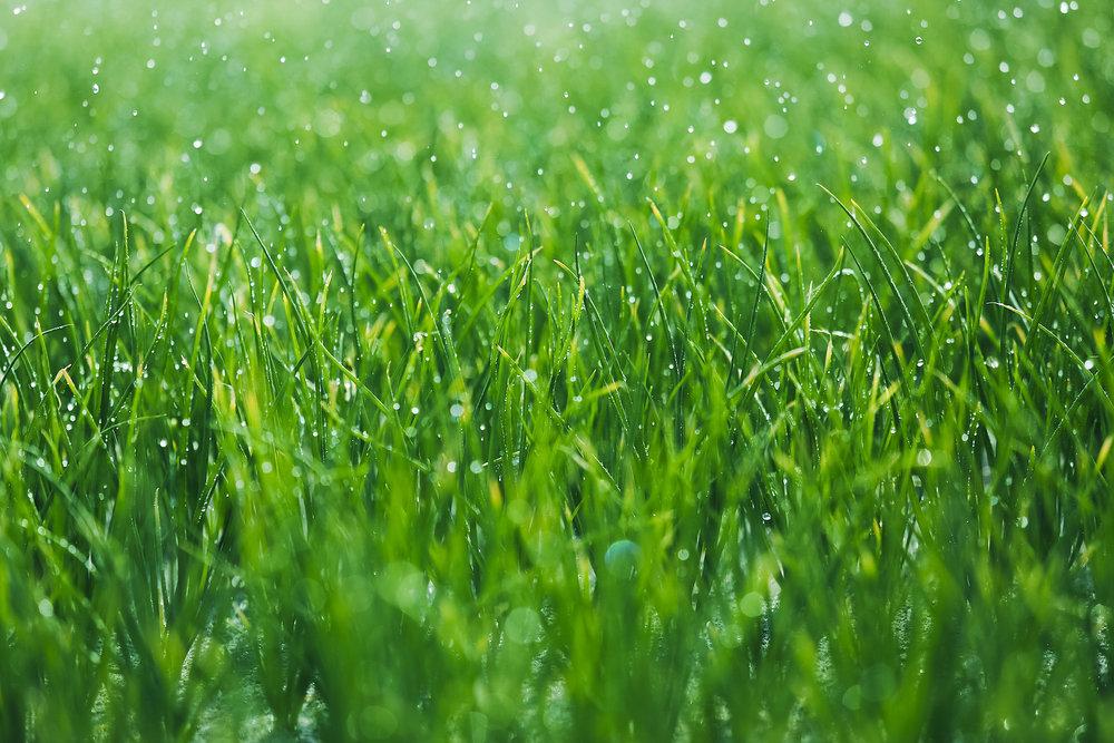 raining grass.jpg