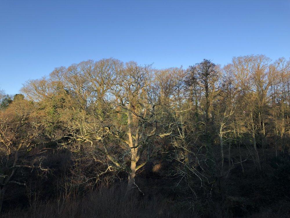chewton_glen_new_forest.jpg