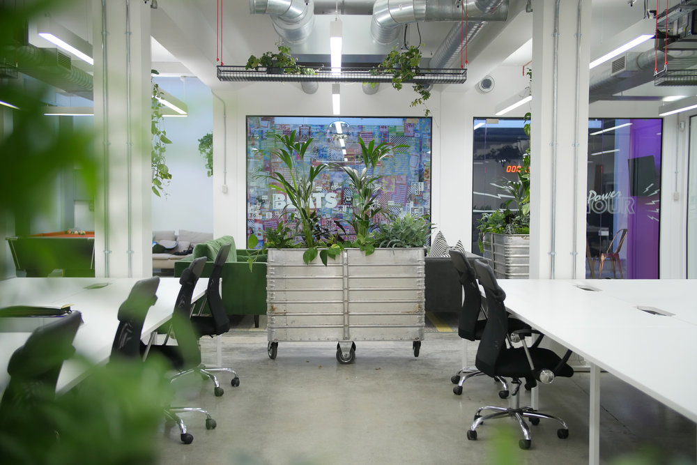 office biophilia design