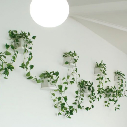 wallplanters