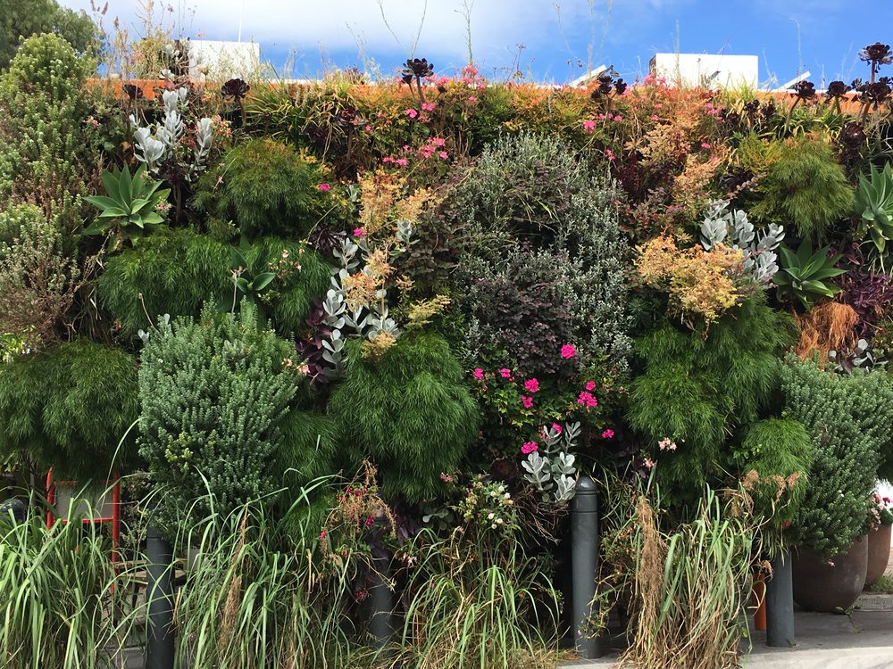 Living Wall Adelaide