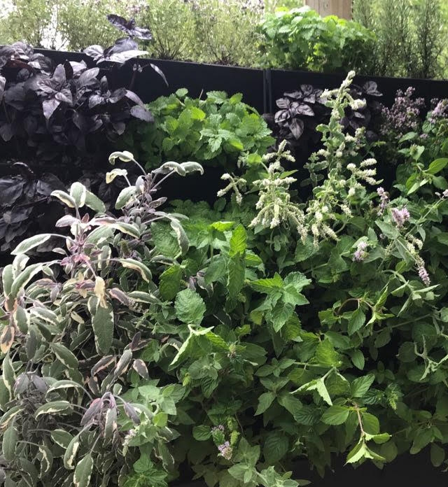 School Edible Living Wall