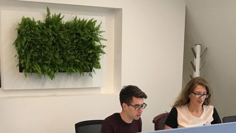 eOffice Live Picture living wall