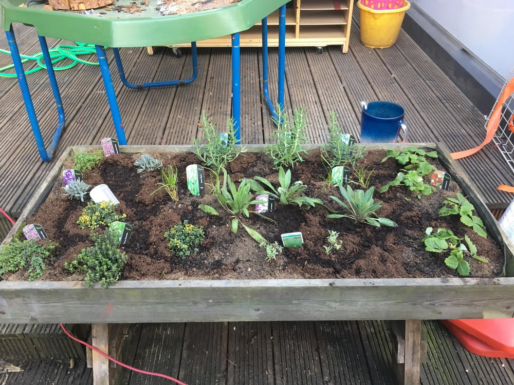 Christopher Hatton Primary School herbs