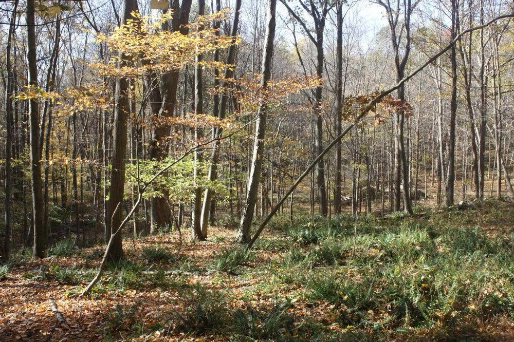 Limestone Forest, Hardwick NJ