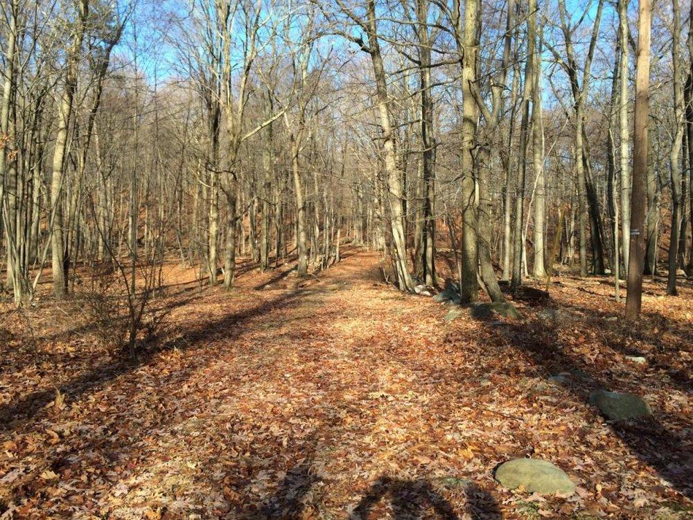 Birch Ridge Ravine, Hardwick NJ