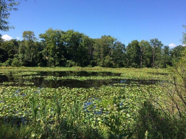 Spring Valley Preserve, Hardwick NJ