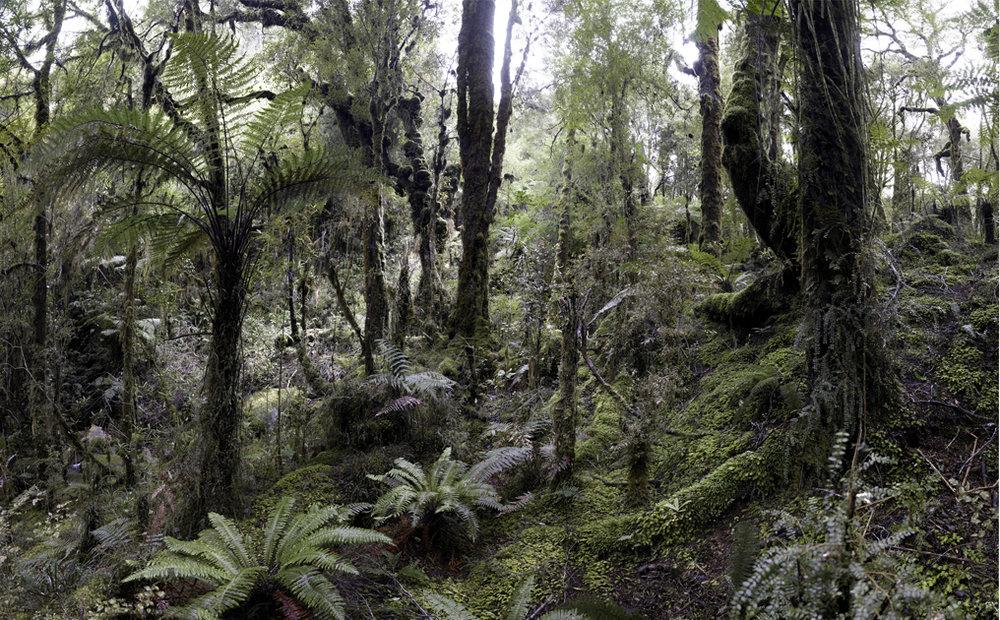 NZ-Oparara#15.jpg