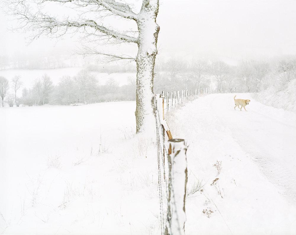 NEIGE_aubrac_chien©AudeSIRVAIN.jpg