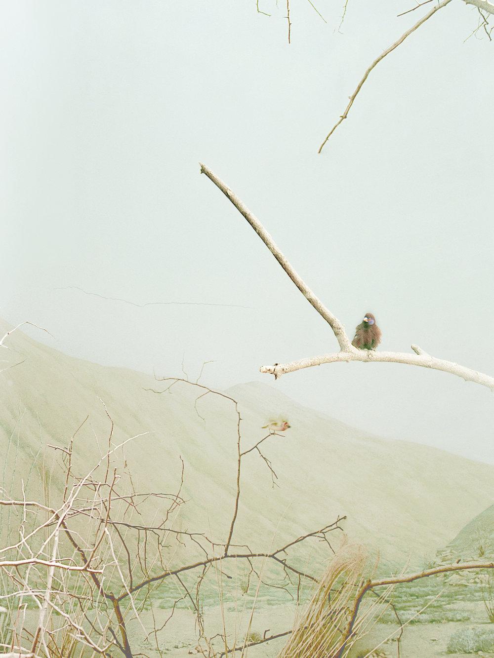 ZOO_oiseau2_1©AudeSIRVAIN.jpg