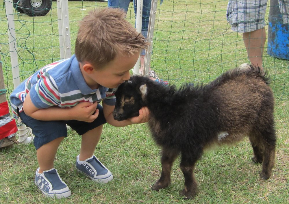 goat.petting.zoo_.jpg