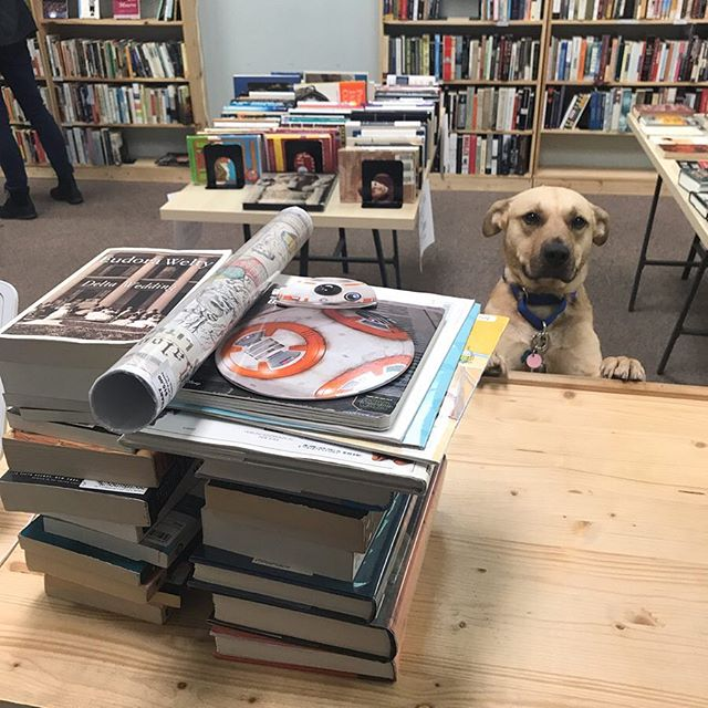 """I'm all set!"" Cedar is taking advantage of many good deals during our closing sale! He loves a good read. 💕  #dogsofinstagram #dogsofbrightleaf #wsnc #dtws"