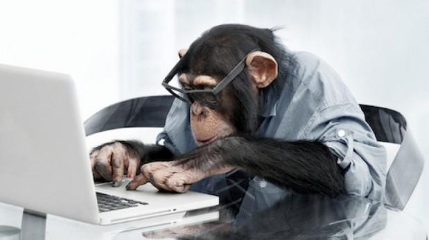 mono-trabajando.jpg