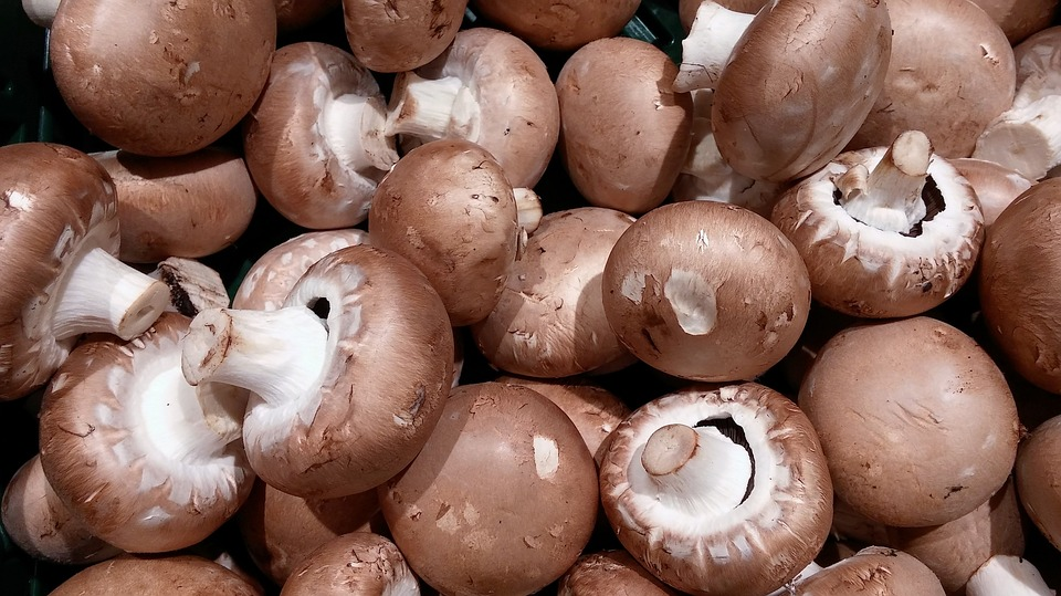 Fitz Fresh mushrooms for everyone