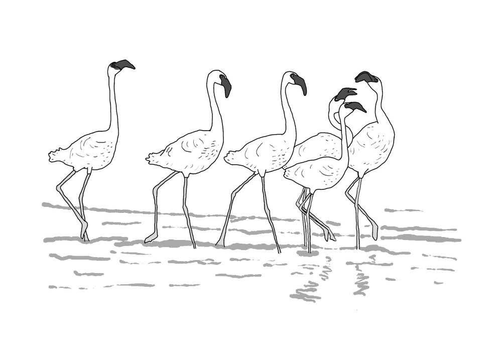 vacation flamingo.jpg